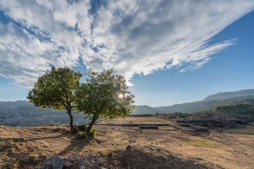 Trees Peru